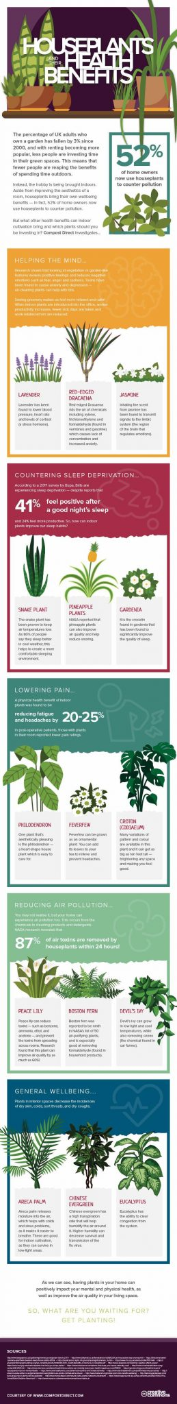 Enhance your home with more house plants and reap the potential health benefits